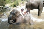 Bath with elephants - Elephant Haven