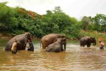 Bathing - Elephant Haven - Kanchanaburi